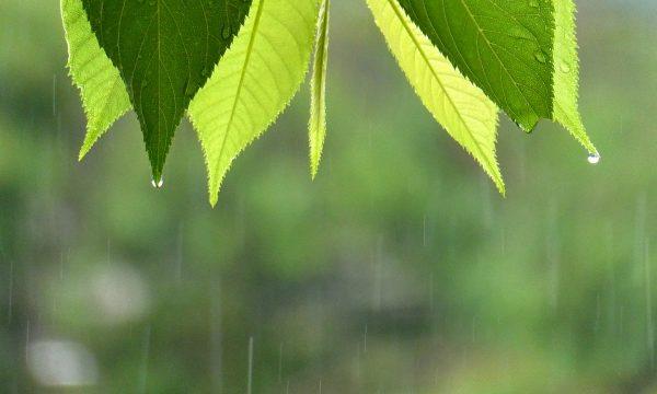 雨が降る前と降り始めてからではどちらの方がしんどいですか?